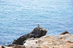Medelhav på en solig dag Yachter i havet Fotografering för Bildbyråer