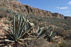 Medelhavs- berglandskap med palmliljaväxter Royaltyfri Foto