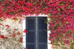 Medelhavs- blommor som omger ett fönster med slutare Arkivbilder