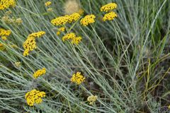 Medelhavs- blommor stänger sig upp Arkivfoton