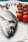 Medelhavs- fiskläckerhet Dorado Arkivfoto