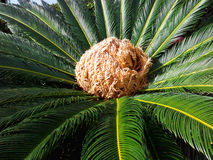 Medelhavs- flora royaltyfri bild