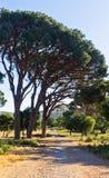 Medelhavs- flora och träd vid en grusväg till den Arcady kloster, ö av Kreta Arkivfoto