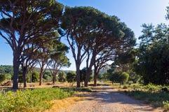 Medelhavs- flora och träd vid en grusväg till den Arcady kloster, ö av Kreta Royaltyfri Bild
