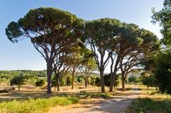 Medelhavs- flora och träd vid en grusväg till den Arcady kloster, ö av Kreta Arkivbild