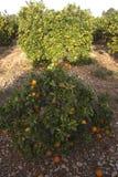 Medelhavs- jordbruk Royaltyfria Foton