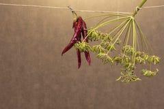 Medelhavs- kryddor, chili och fänkålfrö Royaltyfri Bild