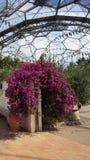 Medelhavs- kupol av Eden Project i Cornwall Royaltyfri Fotografi