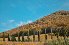 Medelhavs- landskap av kullen i Italien Arkivfoton
