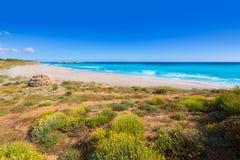 Medelhavs- paradis för Menorca Platja de Binigaus strand Arkivfoto