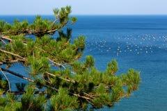 Medelhavs- sörja Fotografering för Bildbyråer