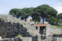 Medelhavs- sörja träd som förbiser Pompeii, Italien Arkivfoton
