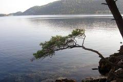 Medelhavs- sörja trädet ovanför det lugna havet Royaltyfri Foto