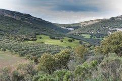 Medelhavs- shrublands och blomningen lägga i träda Arkivfoto