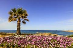 Medelhavs- sikt med palmträdet Royaltyfri Foto