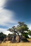 medelhavs- skog Royaltyfri Bild