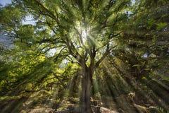 Medelhavs- skog Fotografering för Bildbyråer