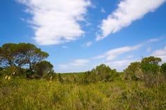 Medelhavs- skoglandskap i Menorca nära Macarella Arkivfoton