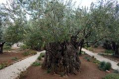Medelhavs- trädgård, closeup filialen royaltyfri bild