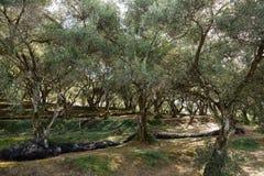 Medelhavs- trädgård, closeup filialen Royaltyfria Foton