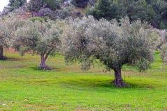 Medelhavs- trädgård, closeup filialen royaltyfri foto