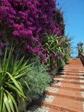 Medelhavs- trädgårds- trappa Arkivbilder