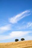 medelhavs- typisk för landscap Arkivfoto
