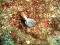 medelhavs- undervattens- royaltyfri foto
