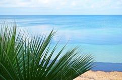 Medelhavs- växt på havsbakgrunden Fotografering för Bildbyråer
