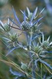 Medelhavs- växter Royaltyfri Bild