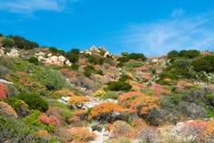 Medelhavs- vegetation Arkivbild
