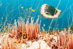 Medelhavs- vegetation Arkivfoton