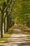 medelhavs- walkway för skog Fotografering för Bildbyråer