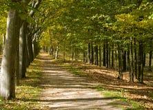 medelhavs- walkway för skog Royaltyfria Bilder
