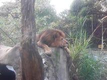 medellin Κολομβία Φε santa ζωολογικών κήπων στοκ φωτογραφίες