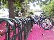 Medellin, Κολομβία - 8 Ιουνίου 2017: Ποδήλατο σε έναν ρόδινο τάπητα των λουλουδιών Στοκ φωτογραφία με δικαίωμα ελεύθερης χρήσης