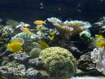 Medellin aquarium. A day at medellin aquarium, daytrip Stock Photos