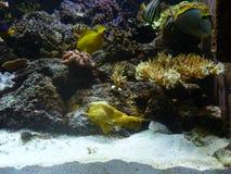 Medellin aquarium. A day at medellin aquarium, daytrip. fish Stock Image