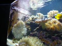Medellin. Aquarium sealife, daytrip, fish2 Royalty Free Stock Images