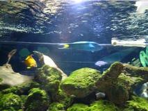 Medellin. Aquarium sealife, daytrip, fish2 Stock Photography