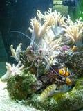 Medellin. Aquarium sealife, daytrip, fish2 Royalty Free Stock Photos