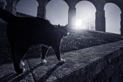 Medeltida katt royaltyfri bild