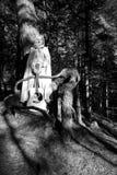 medeltida kvinna Arkivfoto