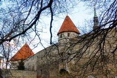 Medeltida vägg och torn i den gamla Tallinn staden Royaltyfri Fotografi