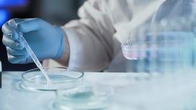 Medewerker van reproductief geneeskundekliniek het bevruchten ei buiten vrouwelijk lichaam royalty-vrije stock afbeelding
