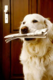 medf8ora hund ny nyheterna arkivbild