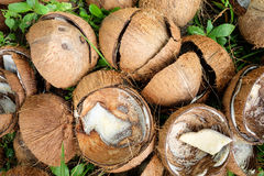 Media cáscara quebrada del coco en natural con la hierba foto de archivo libre de regalías