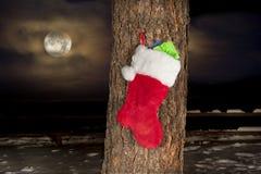 Media de la Navidad en árbol de pino fotografía de archivo