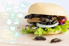 Media icons nutrition of Crickets insect for eating as food items in bread burger with vegetable on wooden table, it is good royalty free stock photos