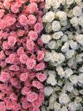 Media mitad de la belleza de rosado y de blanco por la tela Imagenes de archivo